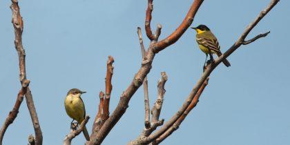 """Projeto """"Território EUROBIRD"""" disponibiliza plano de formação para empresas na área da ornitologia"""