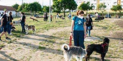 (Português) O Novo Parque Canino de Évora já abriu ao Público