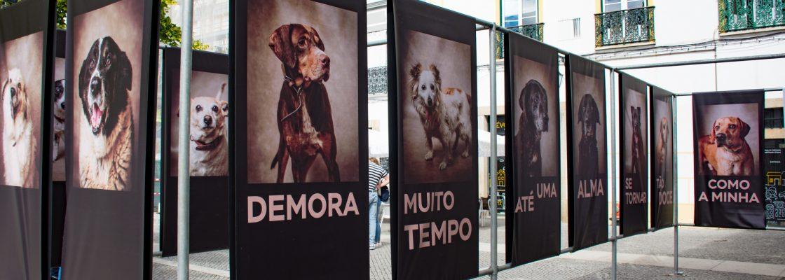 """EXPOSIÇÃO DE FOTOGRAFIA """"FICA – VIDAS CANINAS INTERROMPIDAS"""""""