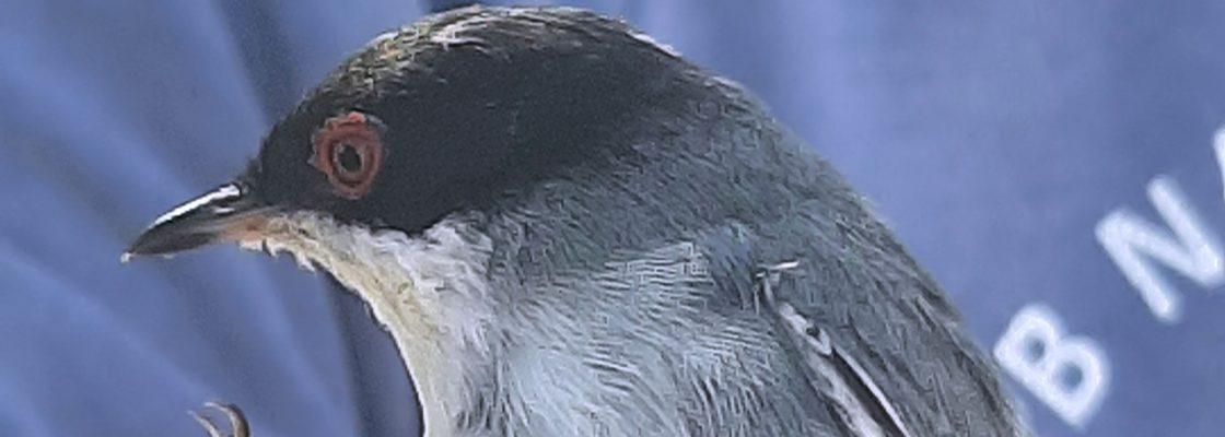 Dia Mundial das Aves Migradoras celebrado em Évora